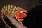 Продажа экзотических животных,   большой выбор по низким ценам!