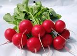 Предлагаем профессиональные семена овощных культур