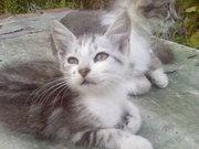 Подарю замечательных,  умных и ласковых котят.