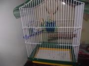 Попугай волнистый голубого цвета мальчик.Продается вмести с клеткой